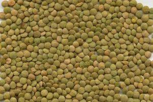 Large Green Lentils